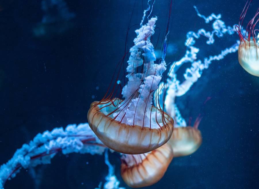 Dubai Aquarium in Dubai Mall