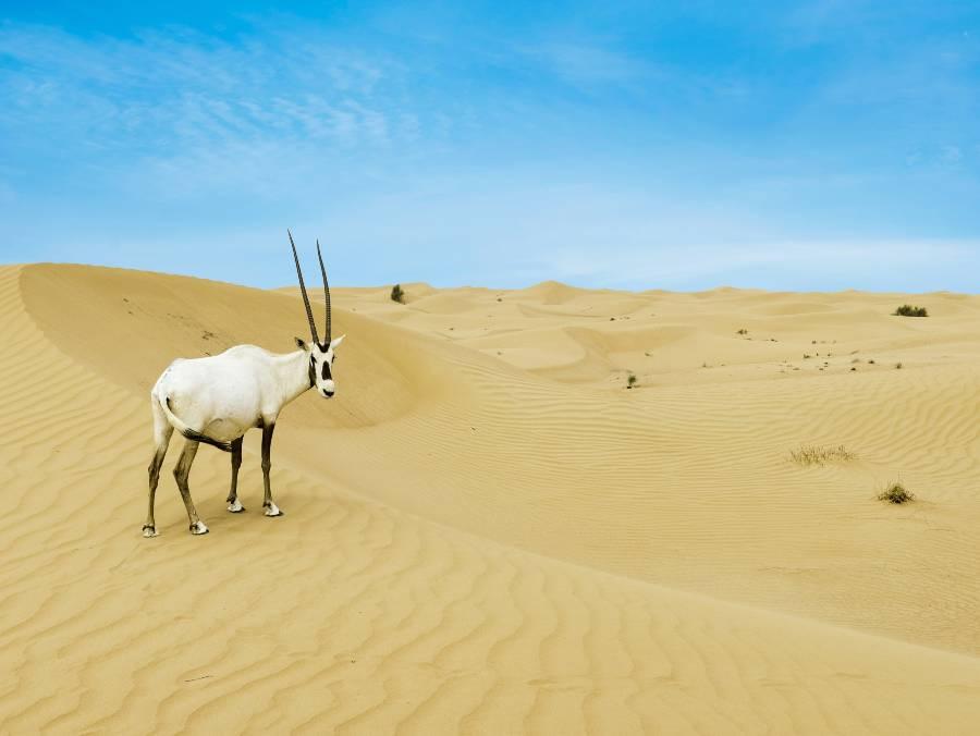 Dubai Desert Wildlife Tour
