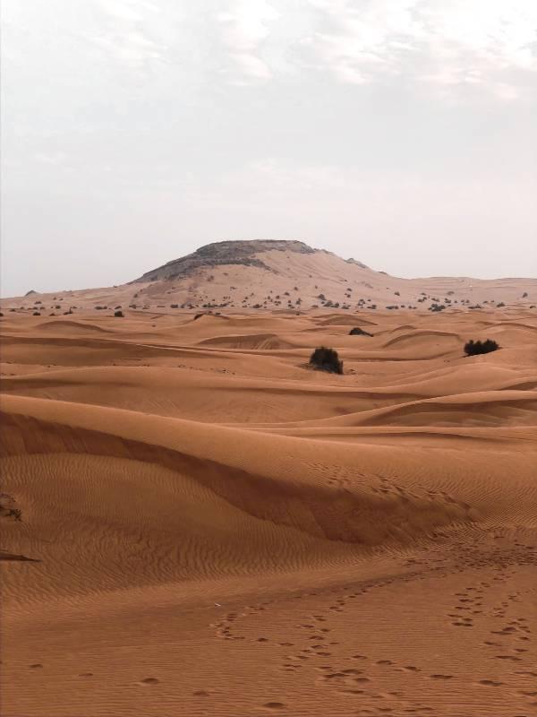 UAE Desert Dubai Abu Dhabi Safari